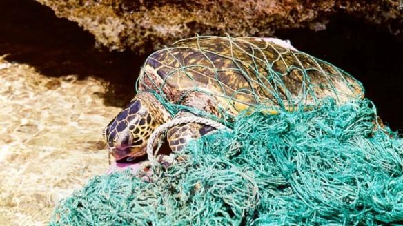160628184748-plastic-turtle-2-super-169