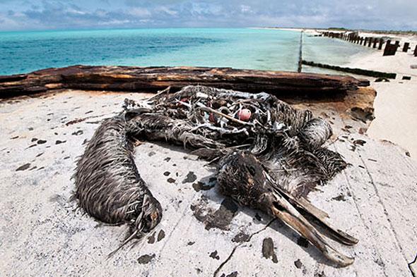 bird-carcass